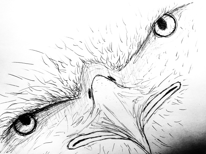 Eagle Drawings #4 and #5