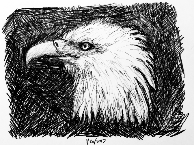 Bald eagle drawing on black