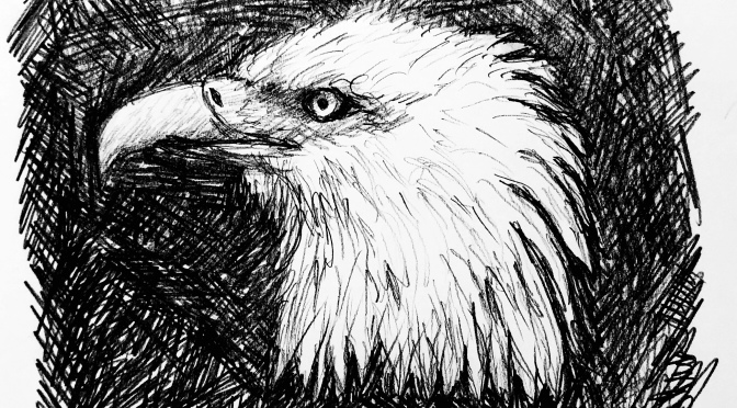 Bald eagle drawing on black