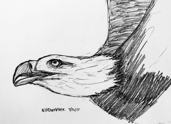 2 eagle drawings