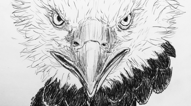 3 eagles, with black feathers around the head