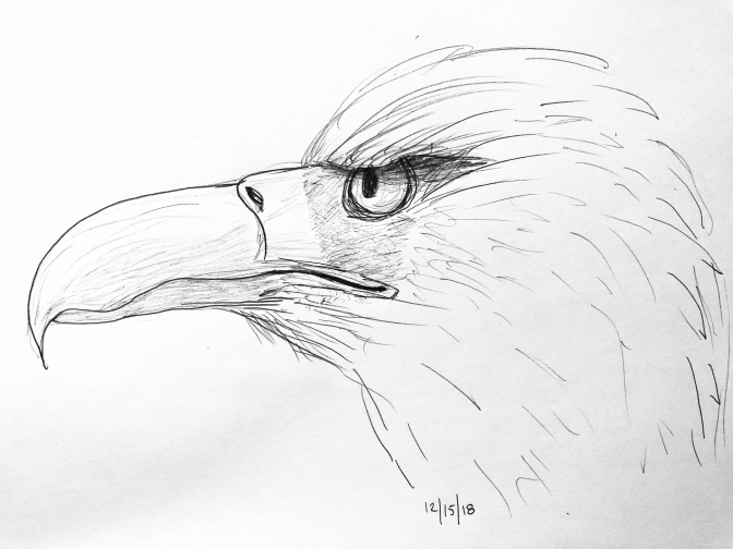Eagle drawing 12/16/18