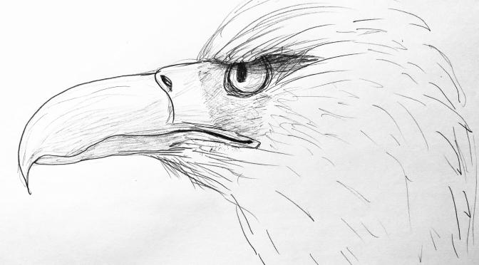 Eagle drawing 12/16/18