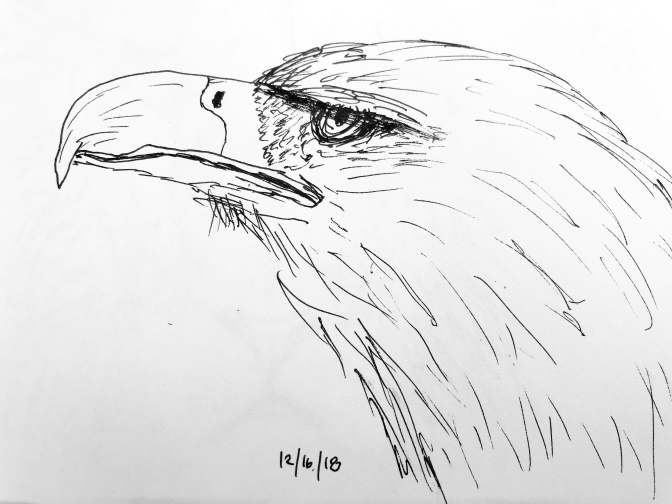 Eagle in pen