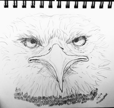 2019 Eagle Nikographer Com