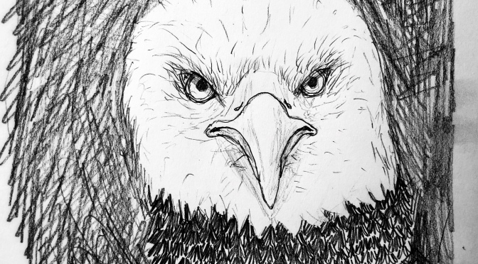 Quick morning eagle drawing