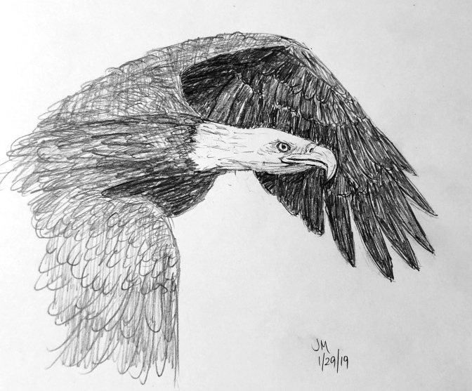 Eagle in flight v2